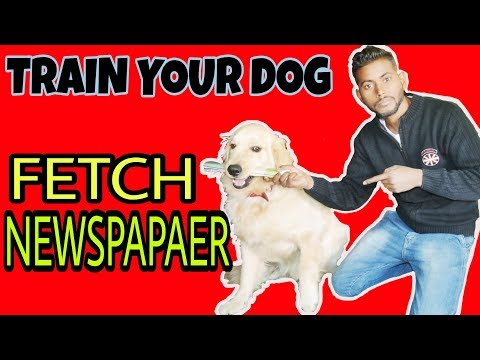 Dog Newspaper Fetch Training