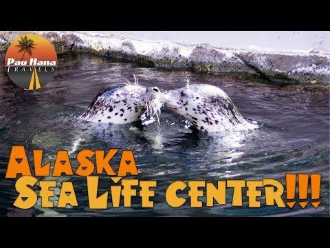 Rving Alaska: Visiting the Alaska Sea Life Center in Seward featuring a rescued baby walrus