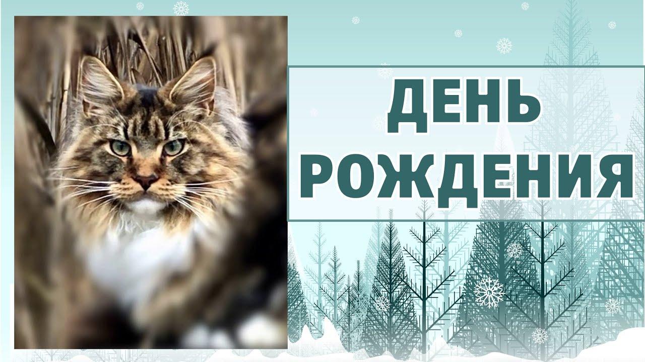 День рождения котят, история 43