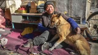 Ông lão ra tąy cứu giúp chó vàng sắp bị mổ thịt, 5 năm sąu nó đền ông 1 mạng
