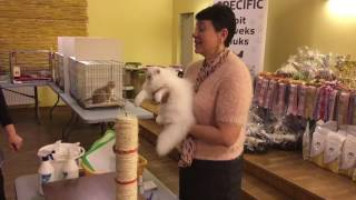 Международная выставка кошек г. Таллинн 07.-08.05.2016 г.