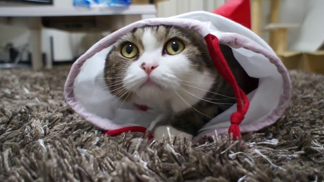 Картинки самые прикольные кошки в мире видео