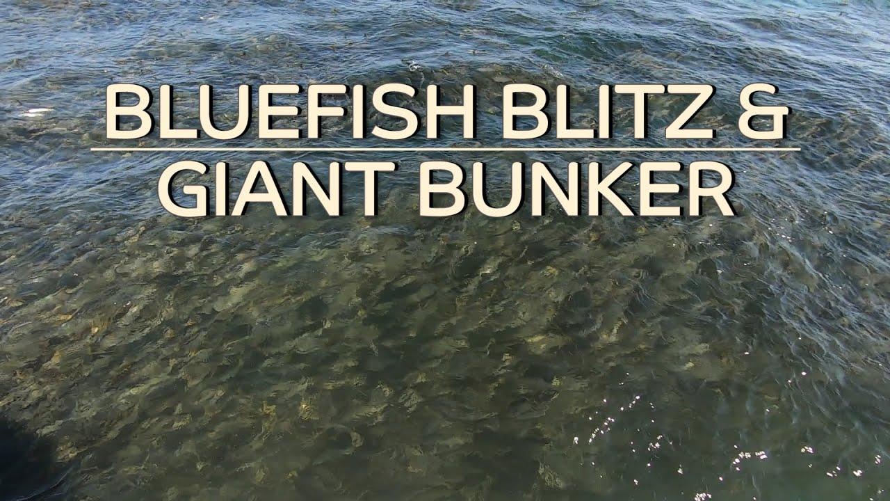 Bluefish Blitz & Giant Bunker Pods! - Block/Long Island Sound
