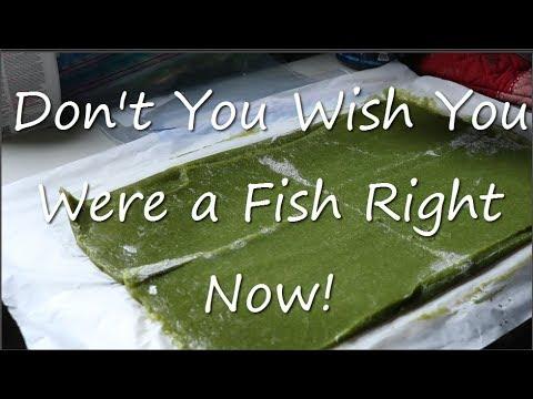 DIY Frozen Gel Fish Food