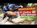Alhamdulillah Si Muka Ultraman Sudah Kawin Di Aviary Semoga Bisa Lestari  Mp3 - Mp4 Download