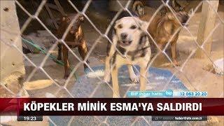 Çekmeköy'de sokak köpeği kabusu! - 15 Eylül 2017
