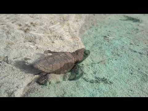 3 minutes of reasons why you should visit Bonaire