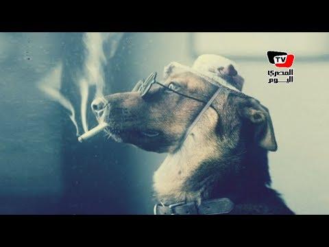 المصري اليوم:٥ حيوانات «الأكثر ثراءً في العالم» .. كلب ثروته 7 مليار جنيه «وماسموش شحيبر»