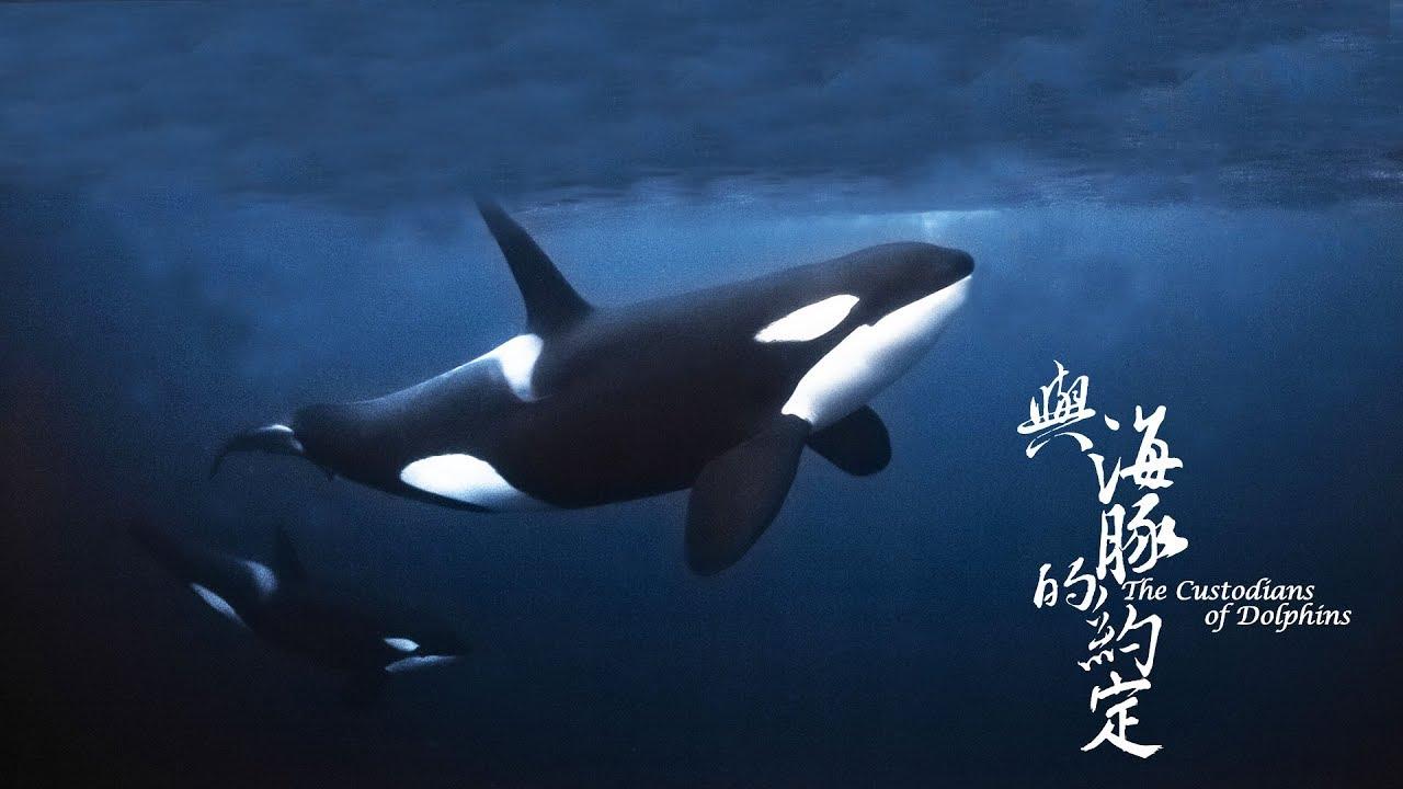 公視4K紀錄片《與海豚的約定》幕後花絮:水下攝影篇 2 - YouTube