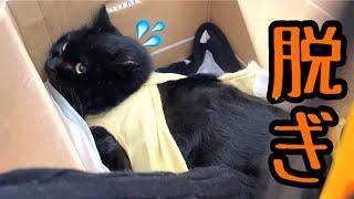 術後服脱皮!保護した黒猫を抜糸に連れて行きます