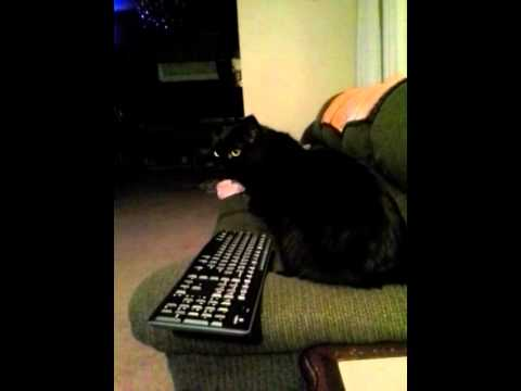 how to make a cat on the keyboard