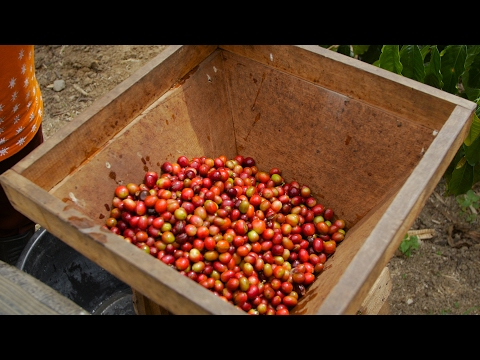 Thumbnail: Why is Sumatran coffee so special?
