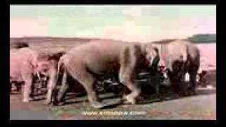 Слон мой друзья.3gp