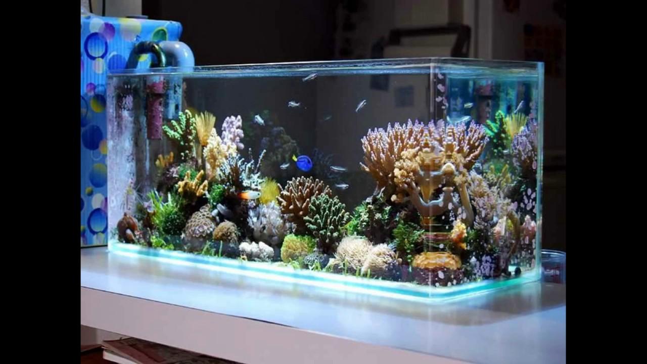 Aqu rio para enfeite de mesa em sumar pet shop for Idee deco aquarium