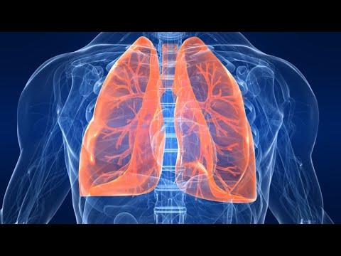 Занятие по теме патология органов дыхания, ОРВИ, детские инфекции - ассистента Наволокина Н.А. СГМУ.