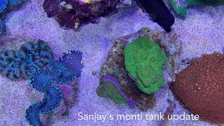 SanJays monti and soft coral t…
