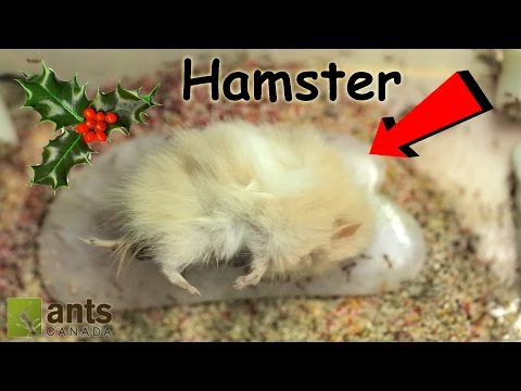 What I Gave My Ants for Christmas | 'Twas the Ants' Night Before Christmas from YouTube · Duration:  10 minutes 20 seconds
