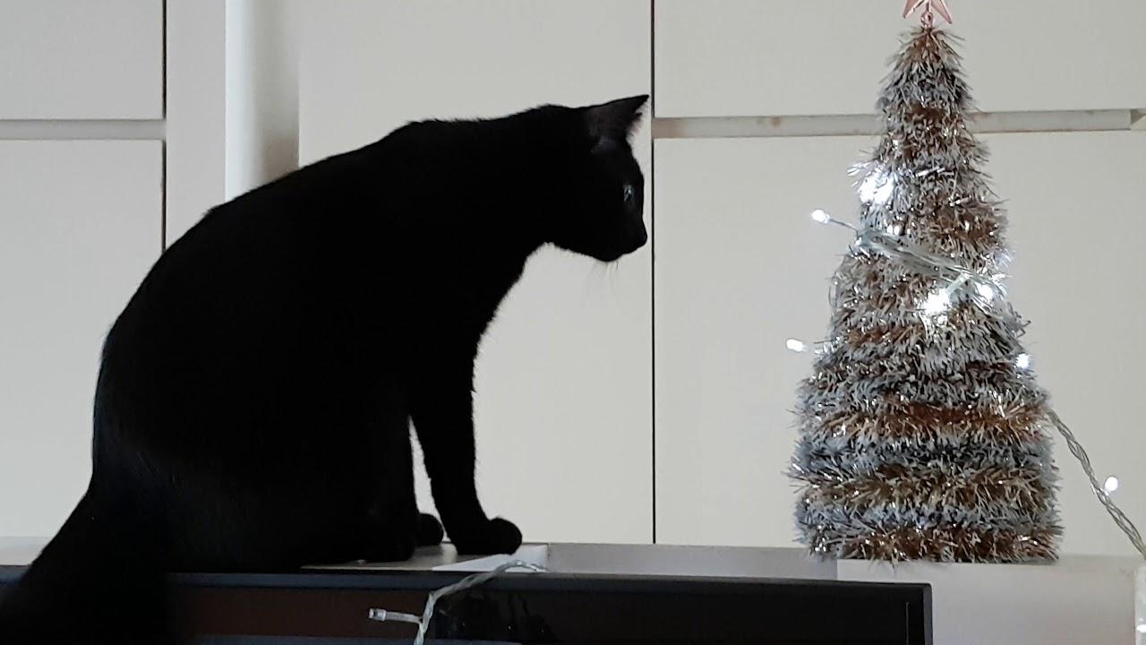 black cat mesmerized by mini christmas tree - Black Cat Christmas Tree