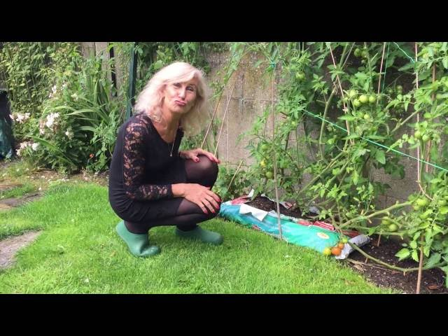 Pomidorai jau noksta - Silvija Travel Tips