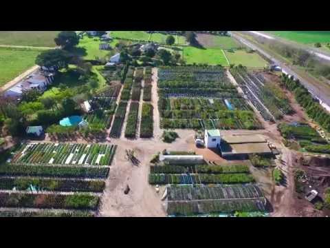 Plant Culture Nursery   Cape Town