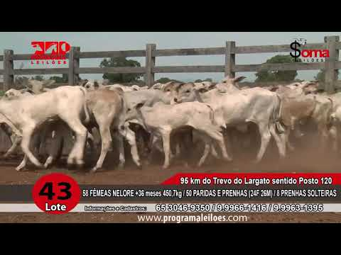 LOTE R43