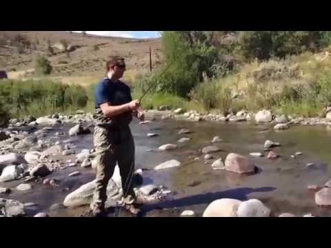 First species of the Wyoming Cutthroat Trout Slam