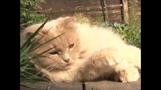 Хвостатые сотрудники: где в Красноярске работают коты?