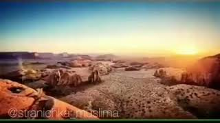 как собака перегрызла горло, за оскорбление Пророка Мухаммада ﷺ»
