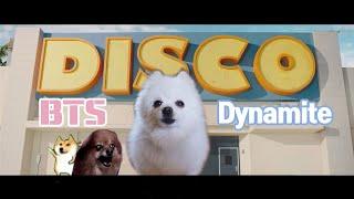 BTS (방탄소년단) ' Dynamite ' dog cover (다이너마이트 강아지 리믹스) YEONTAN'S BAND