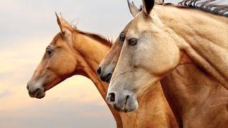 Самые редкие породы лошадей. ТОП 5
