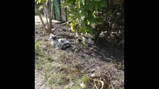 Котята которые живут на даче