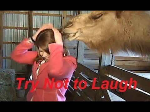 you never stop your laughing Try Not To Laugh on TV 2017 part 1