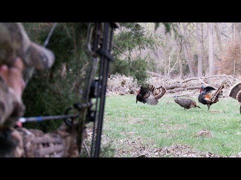 Bowhunting Turkeys: Perfect Shot Placement On 2 Gobblers At 12 Yards