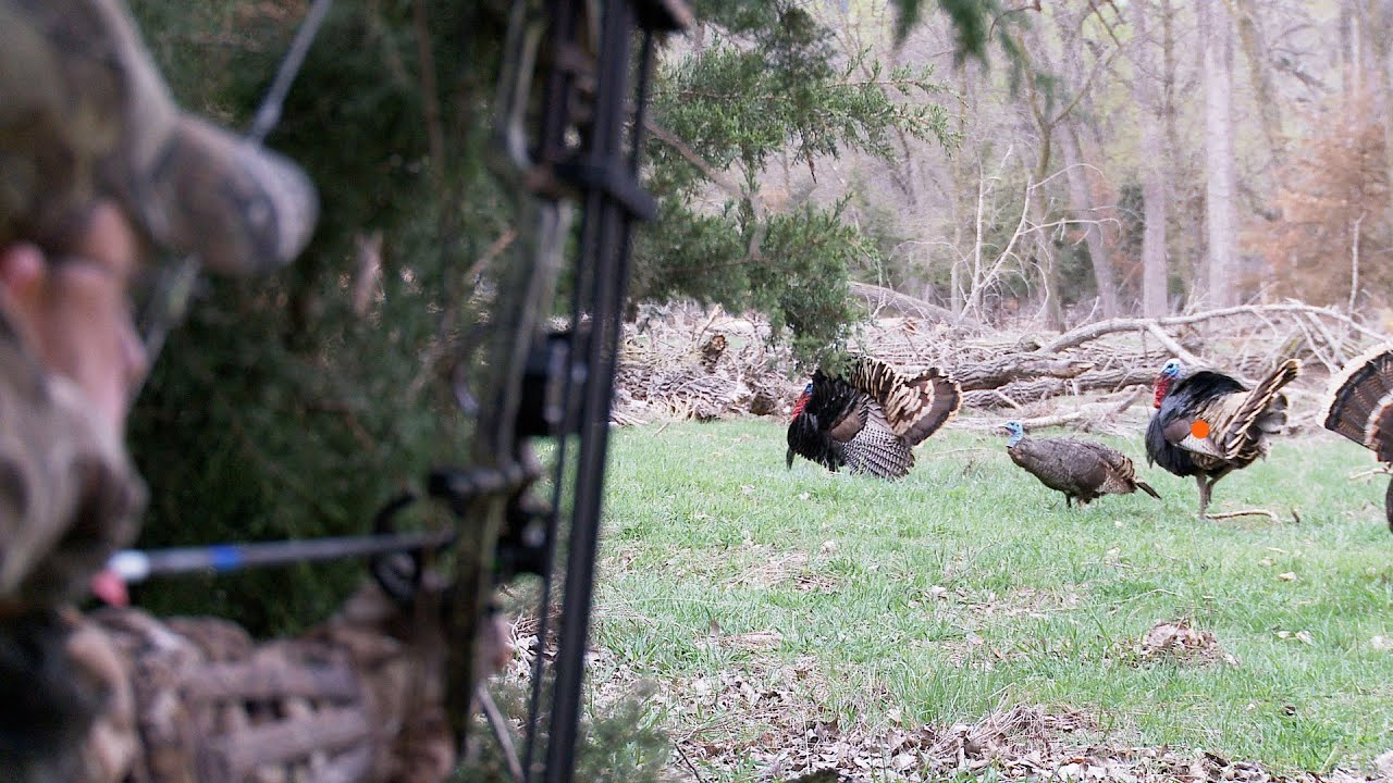 Bowhunting Turkeys  Perfect Shot Placement On 2 Gobblers