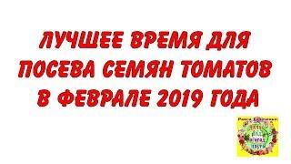 Лучшее время для посева семян томатов в феврале 2019 года