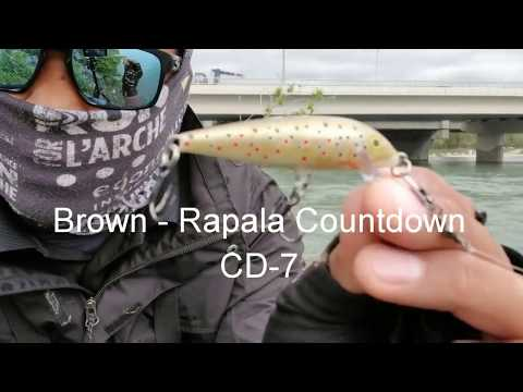 Calgary Bow River - Rainbow Trout Ep.3