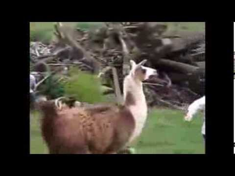 Animals And Humans Being Jerks Compilation Ep New HD - 32 animals complete jerks