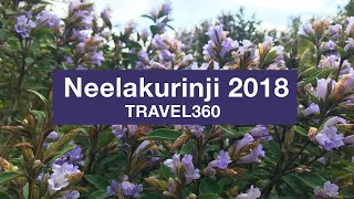 Neelakurinji flowers 2018 after 12 years │  Munnar Top Station │ Travel 360