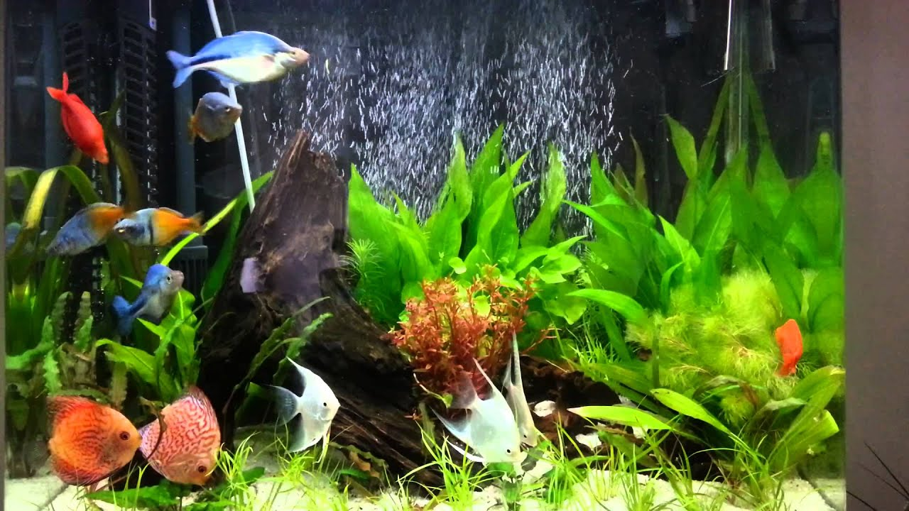 Aqua one 620t discus and rainbow fish - YouTube