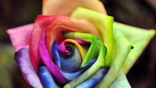 Top Rarest Flower World Mp4