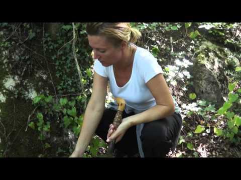 Harvesting Truffles In Croatia