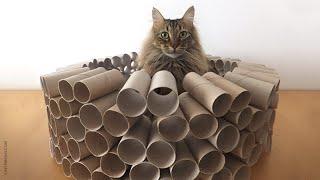 夏休み自由研究:トイレットペーパーでできる!猫用おもちゃを作ってみよう