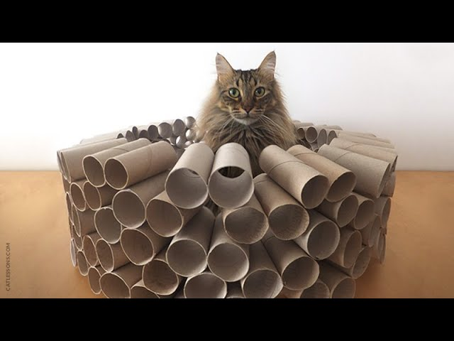 How to Make a Mega Cat Puzzle Toy