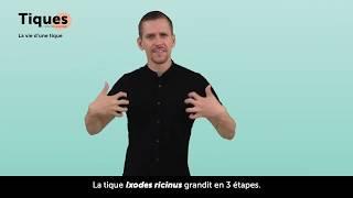 Voix off comédien culture LSF  La vie d'une tique