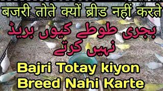 Budgies breeding kiyon nahi karte