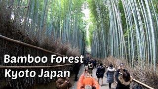 Bamboo Forest Kyoto Japan | Arashiyama Bamboo Grove