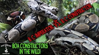 BOA CONSTRICTORS IN THE WILD! (are we keeping them correctly?) REPTILE ADVENTURES IN ECUADOR (2019)