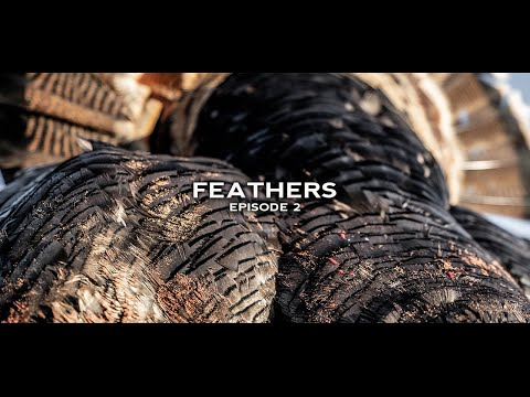 Turkey Hunting- Oklahoma Rios