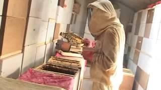 Пчеловодство в павильонах - Можейко (полная версия)