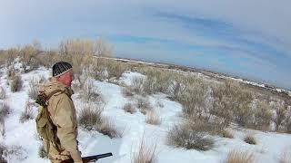 Охота на зайца. Февраль 2019